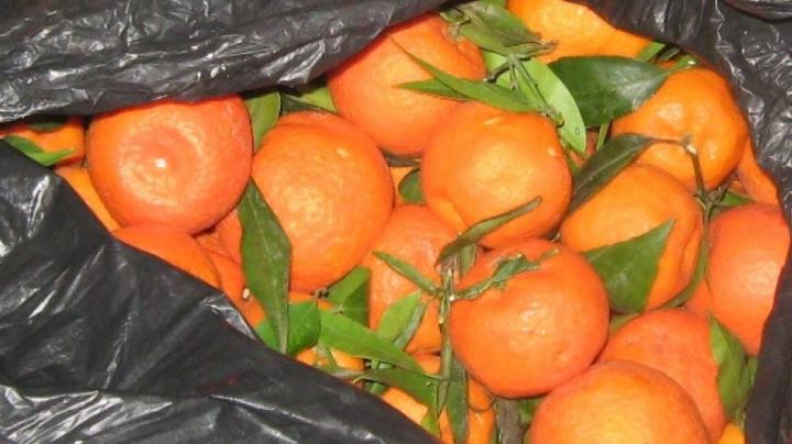 Colete cu produse cosmetice şi fructe exotice ascunse de vameşi