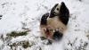 VIDEO FABULOS! Uite cum se rostogoleşte un urs panda prin zăpadă