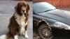 N-o să-ţi vină să crezi! Acest câine umil a mâncat aripa unui Aston Martin
