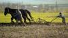 Fermierii moldoveni cer Guvernului introducerea impozitului unic în agricultură