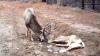 Nouă căpriori au TURBAT în pădurea de la Căpriana. Silvicultorii au declarat două luni de carantină în zonă
