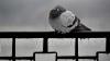 Termometrele arată ger de minus 20 de grade! Cum se descurcă animalele şi păsările de la Grădina Zoologică (VIDEO)