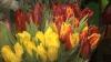 Florarii au majorat preţurile de Ziua Îndrăgostiţilor. AFLĂ cât costă un buchet în pieţele din capitală