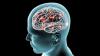 Cum este influenţat creierul de anotimpul în care te naşti. Efectele sunt SURPRINZĂTOARE!