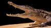 """Un bărbat trăieşte cu un crocodil de Nil în casă. """"Mi-a smuls patru degete!"""" (VIDEO)"""