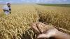 500 de milioane de lei pentru fondul de subvenţii în 2014! Agricultorii deja pot depune dosarele pentru subvenţionare