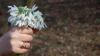 (VIDEO) Furt la Grădina Botanică: Un pâlc de flori incluse în Cartea Roşie a dispărut fără urmă