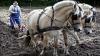 Un agricultor din Drochia nu renunţă la plugul tras de cai. Face economii de peste 20 000 de lei