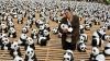 Urşi panda, la tot colţul în Taipei. Au atras un sfert de milion de curioşi