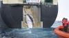 Japonia nu va mai vâna balene în Antarctida