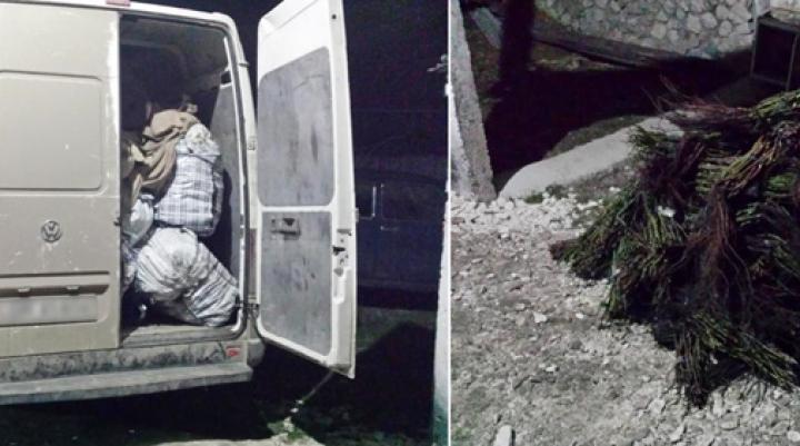 Contrabandă cu ghimpi la hotarul moldo-ucrainean. Marfa se estimează la circa 270.000 de lei