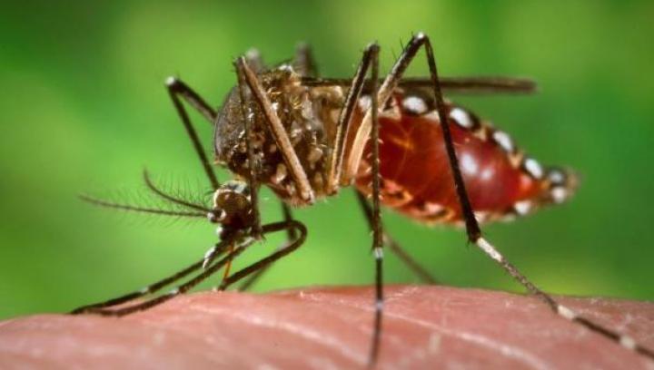Remediile naturale pentru tratarea înțepăturilor de țânțari la copii