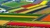 Imagini desprinse din poveste: Câmpiile înflorite ale Olandei de la înălţime (FOTO)