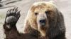 Nebunie ziua în amiaza mare! Un urs evadat de la zoo a fost prins cu mâinile goale de câţiva bărbaţi (VIDEO)