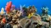 Lumea subacvatică slow-motion. TE VOR UIMI mişcările făcute de corali şi bureţi (VIDEO)
