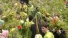 De Florii, în bisericile din Moldova au fost oficiate servicii divine speciale