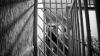 Un deputat PLDM este cercetat penal. Parlamentarul riscă să stea după gratii