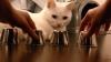 KIDO, cea mai deșteaptă pisică din lume! Felina face furori pe Internet (VIDEO)