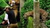 Panică şi groază într-un sat din India! Un localnic s-a pomenit cu un leopard în casă