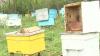 Tragedie pentru un apicultor din Teleneşti. Prisăcarul ACUZĂ un fermier că i-a ucis albinele