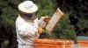 La 25 de ani o tânără din Ungheni se poate lăuda cu o afacere de succes în domeniul apiculturii (VIDEO)