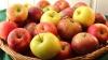 Ambasadorul Lazurcă: România pledează pentru majorarea cotei de export al merelor moldoveneşti în UE