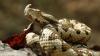 Descoperire grandioasă în istoria Moldovei! Poliţia a găsit venin de viperă în valoare de circa 3 000 000 de euro