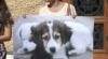 Protest cu jucării de pluş la Primărie! Mai mulţi activişti sunt indignaţi de uciderea maidanezilor