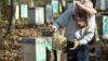 """DEZASTRU pentru un apicultor din Drochia. """"Ne-am speriat când am venit la prisacă"""" (VIDEO)"""