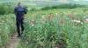 MAC 2014: Poliţiştii au rămas uimiţi când au văzut ce ''roadă'' avea un bărbat din Cimişlia în grădină (FOTO/VIDEO)