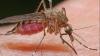 Ploile au favorizat înmulţirea ţânţarilor. Insectele au devenit mai agresive decât cele din generaţiile precedente