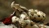 Trei persoane reţinute pentru contrabandă cu venin de viperă vor sta în arest la domiciliu