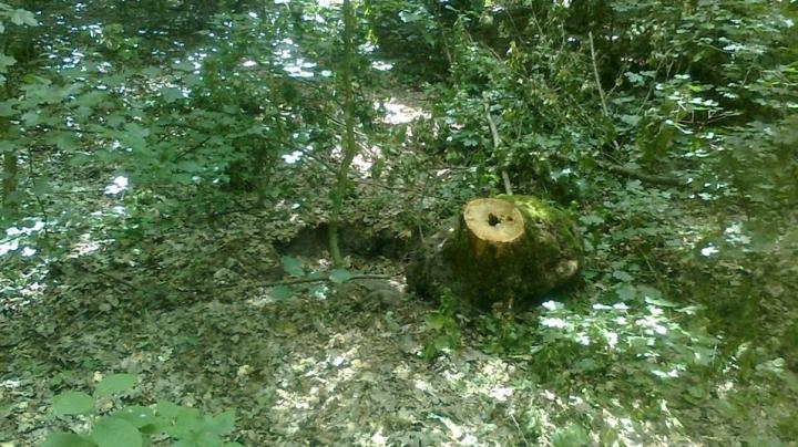Noaptea la furat pădurea. Locuitorii au sesizat tăieri ilicite în ocolul silvic Otaci