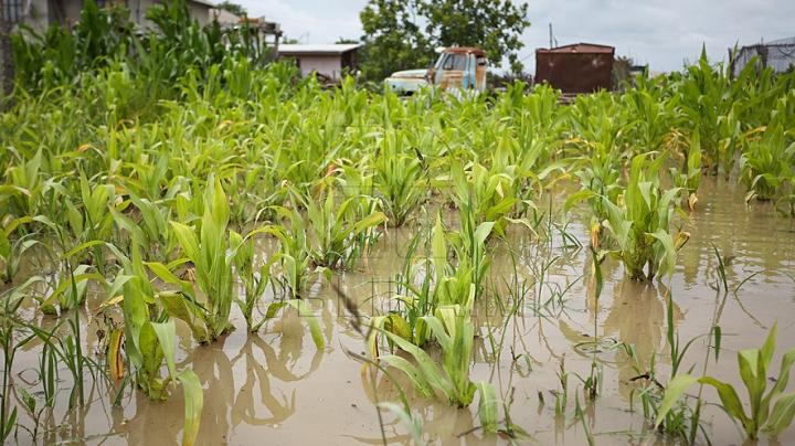 Ploaia de ieri a făcut ravagii în ţară: Mai multe hectare de culturi agricole au fost afectate