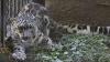 """""""Iubesc să fie răsfăţate!"""" Din culisele vieţii îngrijitorilor de animale de la Grădina Zoologică din Chişinău"""