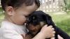 ATENŢIE: Animalele de companie pot fi surse de infecţii pentru stăpânii lor