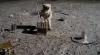 Revista presei internaţionale: Rusia planifică să trimită astronauţi pe Lună în 2030-2031