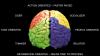 Oamenii de ştiinţă au făcut o descoperire uimitoare despre creier