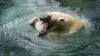 Deliciu pe timp de arşiţă: Urşii de la o grădină zoologică mănâncă îngheţată cu carne (VIDEO)