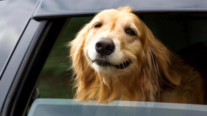 La ce risc sunt expuşi câinii în această perioadă? Ignoranţa stăpânilor îi pune în mare pericol