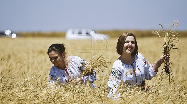 Producătorii de cereale prognozează roade bune: Grâul e mai mult şi mai calitativ decât anul trecut