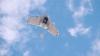 Prima dronă pentru livrări de produse uşoare a fost prezentată de Google