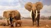 Cel puțin 55 de elefanți au murit de foame în Parcul Național Hwange din Zimbabwe
