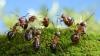 Izolăm grupul sau eliminăm bolnavul? Cum procedează insectele în cazul epidemiilor