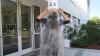 Ice Bucket Challenge ia amploare în Moldova. Cine sunt politicienii şi artiştii care au acceptat provocarea (VIDEO)