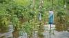 Ploaia torenţială a distrus sute de hectare de culturi agricole! Cel mai mult a avut de suferit floarea soarelui