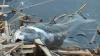 Catastrofă ecologică lângă Chişinău. În lacul Ghidighici au pierit câteva tone de peşte