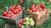"""""""Dezvoltăm agricultura pentru un viitor normal"""". Un nou spot de promovare a integrării europene (VIDEO)"""