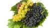 Soluţiii pentru producătorii de struguri. Guvernul sugerează vinificatorilor să cumpere mai multă materie primă
