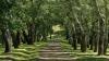 Mii de copaci vor fi sădiţi în capitală de Ziua Naţională a Înverzirii Plaiului
